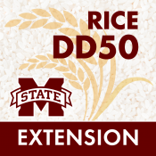 RiceDD50 App Icon